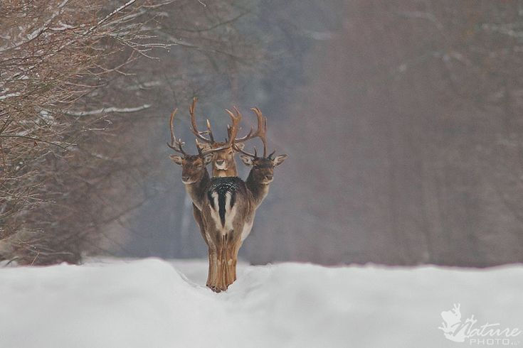 Deer Oh Deer Oh Deer