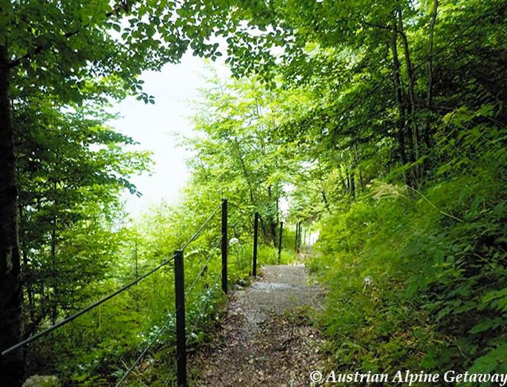 The forest path above Hallstatt- Check out our Hallstatt blog posts  Link in Bio above.   In every walk with Nature one receives far more than he seeks. (John Muir)  #Hallstatt #beautifulvillage #salzkammergut #salzburg #salzburgerland #austrianalps  #austria #österreich  #hiking #hikingwithkids #wanderlust #fernweh #seetheworld #travelphotography  #travel #mountainlife #photooftheday  #theglobalwanderer #bucketlist  #discoveraustria #365austria #österreich #austriavacations #visitaustria…