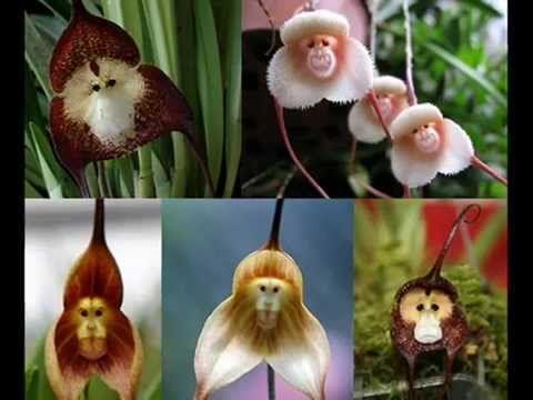 Las flores más raras y exóticas del mundo INCREÍBLE!