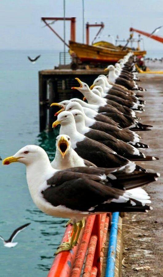 Seagulls                                                                                                                                                                                 More