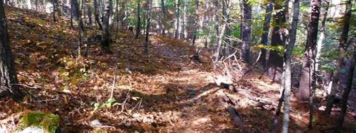 Stone Cat Trail Races - November 8, 2014