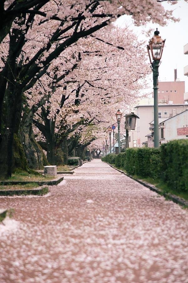 Camino Rosa.