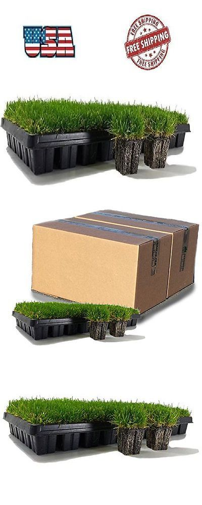Seed Starting and Cloning 178986: Zoysia 50 Plugs Trays Planting Indoor Outdoor Gardening Lawn Grass Yard Patio -> BUY IT NOW ONLY: $48.76 on eBay!