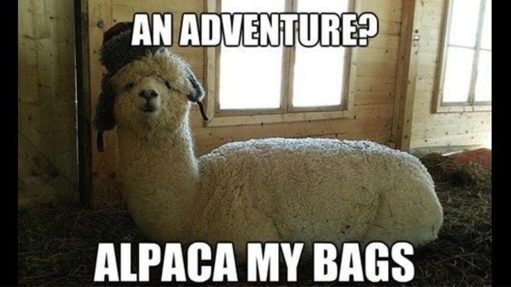 An adventure? Alpaca my bags. #bad #puns