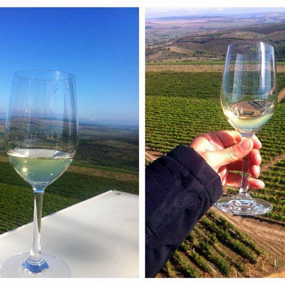 Vinul Conacul Ambrozy, Cramele Recas