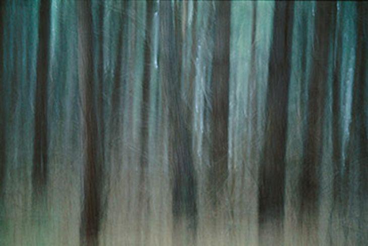 Night Pines