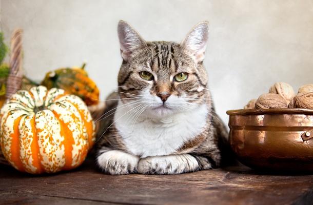 Jak odchudzić kota? Więcej: http://www.kobieta.info.pl/zwierzta-w-domu/1595-jak-odchudzi-kota