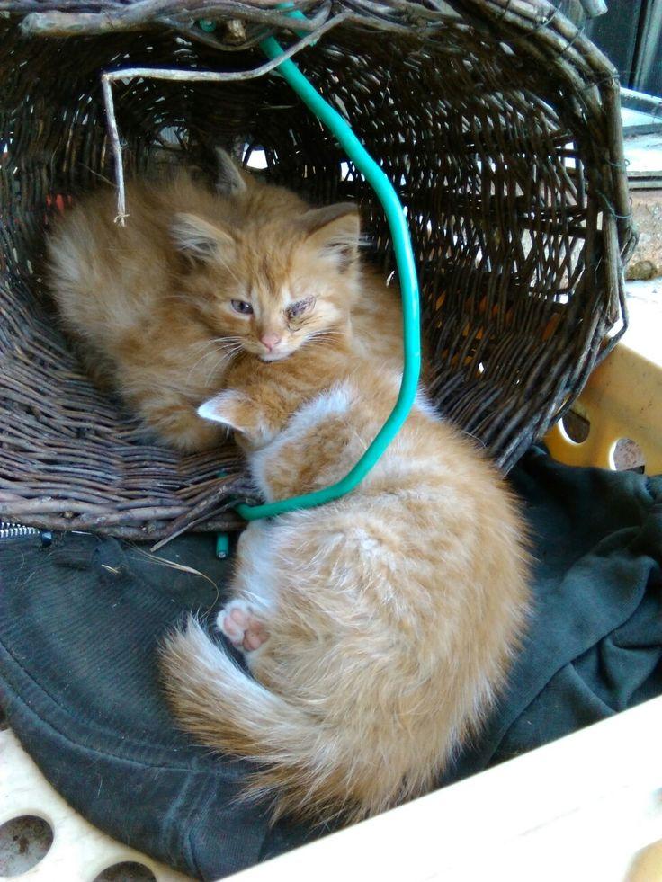 Koťata 20.4. 2016