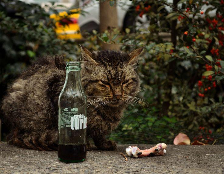 thug cat in Istanbul