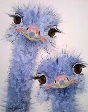 ORIGINAL watercolour animal/wildlife/farm art painting OSTRICH by Clare Crush