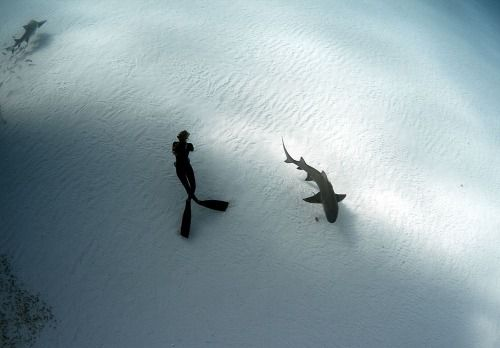 A female freediver takes in the underwater scene, as a lemon shark slowly swims