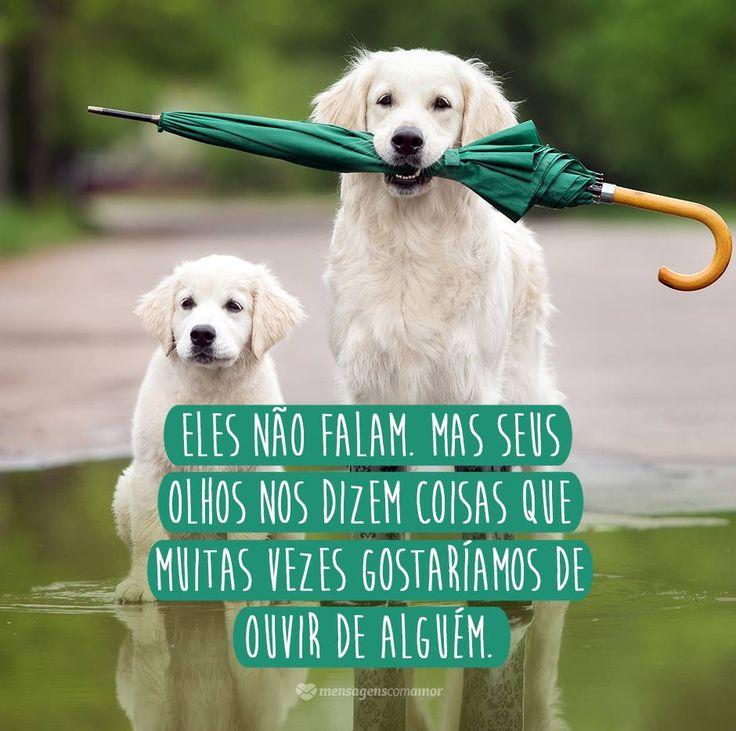 Muitas vezes eles são nossos melhores amigos. Dia 14 de março é comemorado o Dia Nacional dos Animais. Que tal cuidar e dar muito amor a eles?