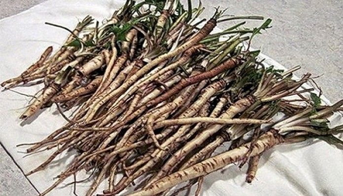 100-Times-More-Effective-Then-Chemotherapy-A-Herb-That-Kills-Cancer-Cells-In-48-Hours-1