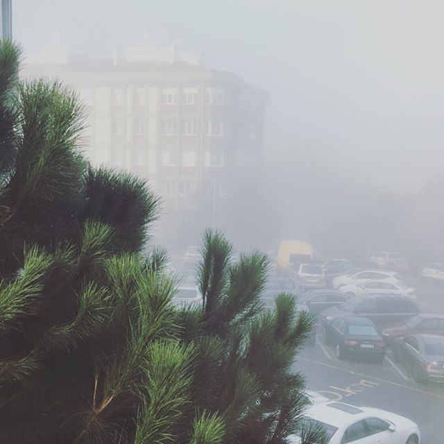 Good morning all! I woke up to a #misty morning today {and hello to my beloved pine tree}