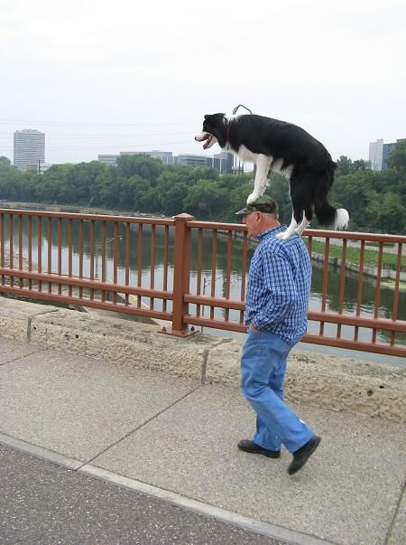 A good trick ... if you like having your Border Collie balance on your head #dogs Via: http://imgur.com/UbIPa