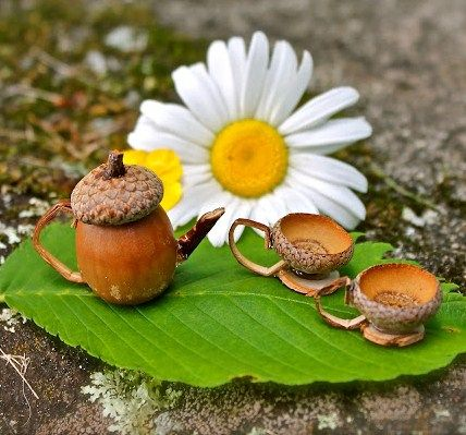 DIY Miniature Acorn Fairy Tea Cup and teapot Set TUTORIAL
