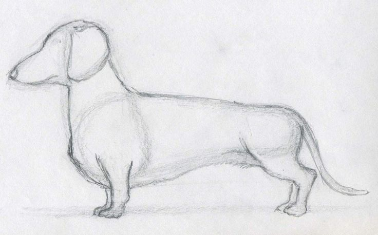 how to draw a weenie dog - Bing Images