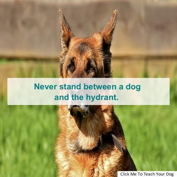 Dog Training Hutto Dog Training Obedience Guide Dog Training