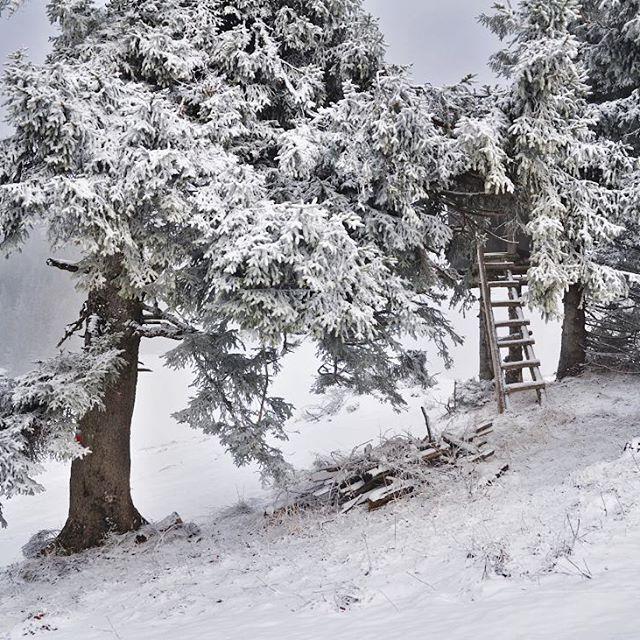 Люблю заснеженный лес. А тут еще и лестница, ведущая в неизвестность. Хорошо там прятаться... Видимо, это для охотников придумали. Лишь бы они в таком уютном домике не увлеклись слишком и не забыли зачем пришли))) #фотоизабеллазубкова #лес #австрия #снег #зима #гора #природа #пейзаж #путешествия #landscape #nature #travel #scenery #beautiful #view #scenic #tourism #natural #tree #environment #land #winter #mountain #snow #izabellazip #фотограф