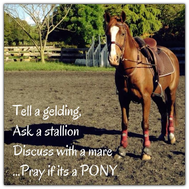 Unless you have my mares! Coco says ok I just want to please and Maggie says I just wanna run!☺️