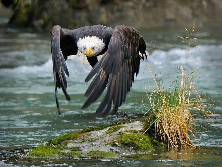 #photography #animals #eagle