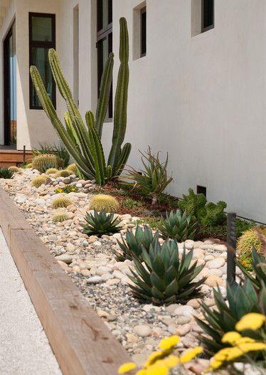 Cactus and succulent garden – Euphorbia – golden barrel cactus – pebble ground cover – pebble mulch