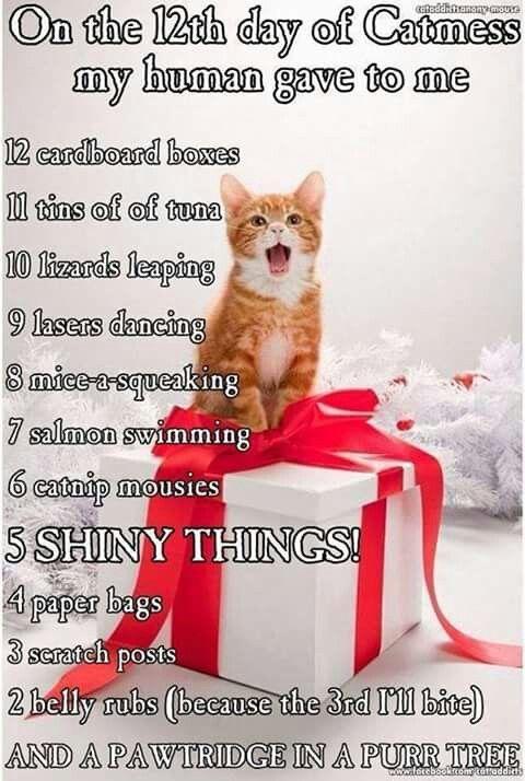 Sayings Cute Cards Put Christmas