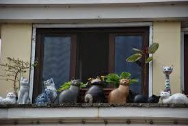 A tokaji macskák  Nekem is van képem róluk, majd megkeresem. Azóta kedvenceim