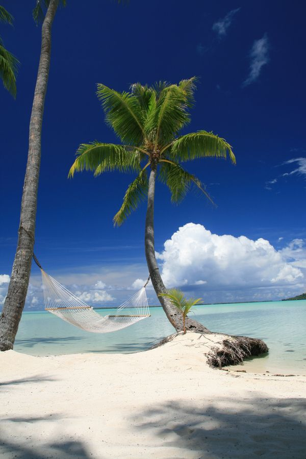 Le Taha'a - French Polynesia: I think I may have lounged in this very hammock . . . . Oh if I could only get back there . . .