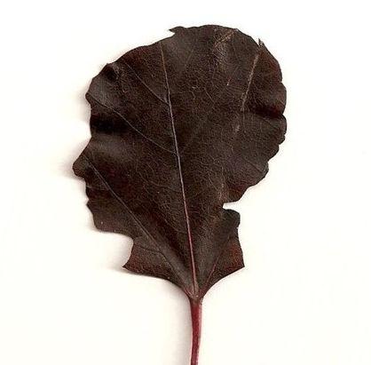 leaf silhouette = brilliant.Decor Ideas, Silhouettes Diy, Gift Ideas, Diy Gifts, Leaf Silhouettes, Silhouettes Leaf, Handmade Diy, Gift Handmade, Diy Decor