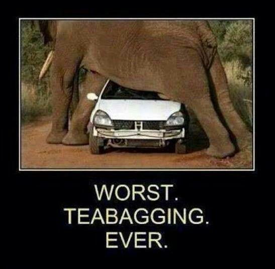 Tea bag | Funny | Pinterest