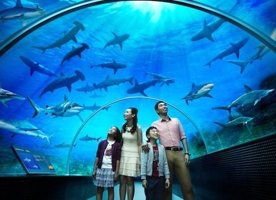 S.E.A. Aquarium, Singapore (one of the largest in the world) #SGTravelBuddy