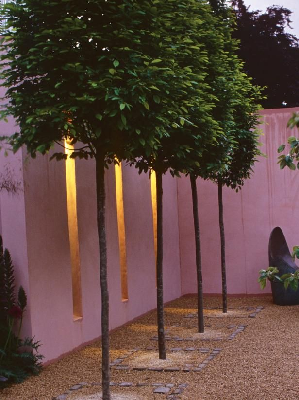 Patio with tall skinny trees stucco siding and led for Garden city trees