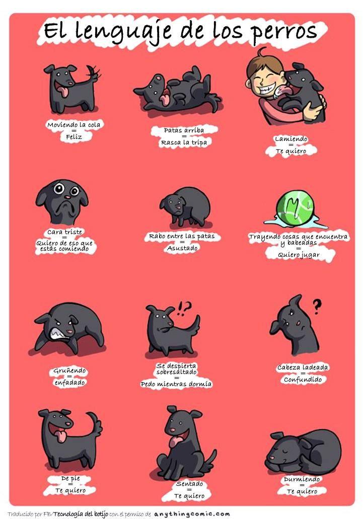 El lenguaje de los perros.