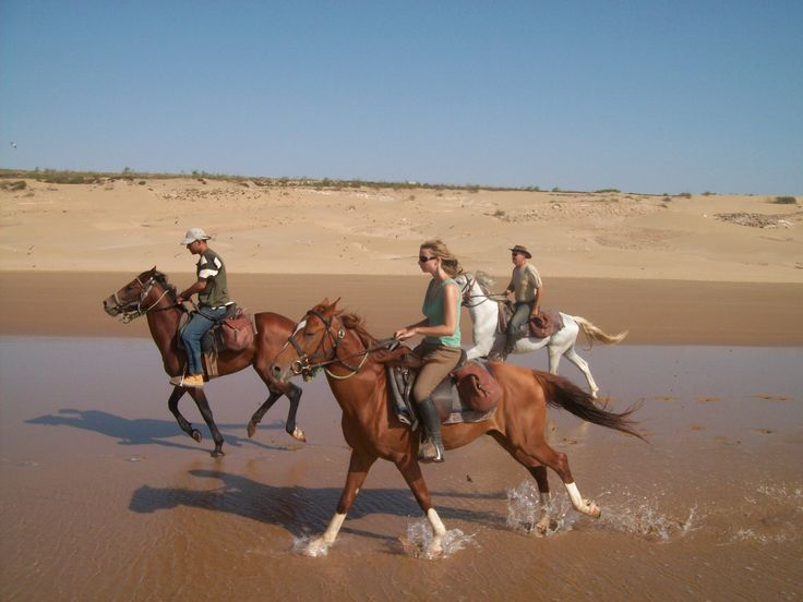 1000+ Images About Horse Morocco On Pinterest