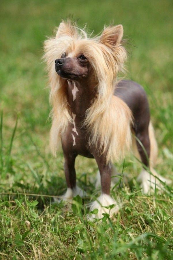 6 Allergiker Hunde Rassen Fur Tierlieber Mit Schnupfen Wohnideen Und Dekoration Hunde Rassen Hunde Tiere