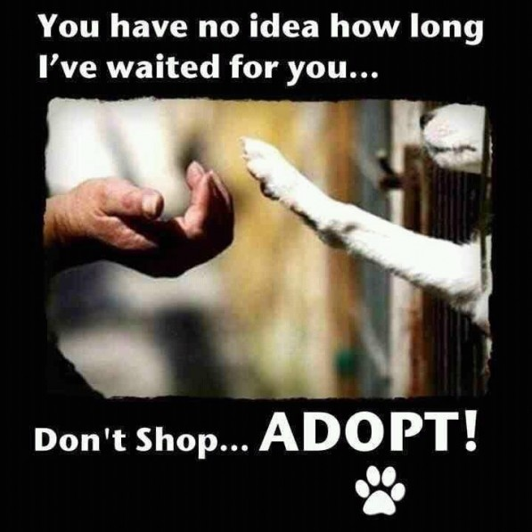 They're are millions of puppies out there at about to die and instead of saving the, you're buying them at a store.