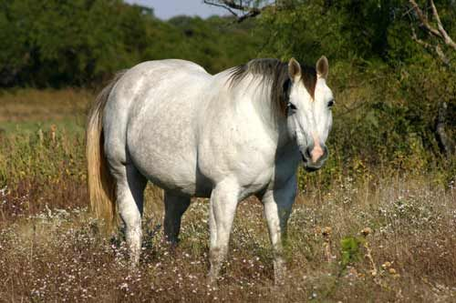 17  best images about toxic plants for horses on pinterest