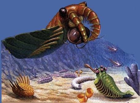 paleozoic animals - Google Search | Denote | Pinterest