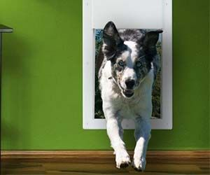 Bring the doggy door into the 21st century with the electronic doggy door. This automatic & Best 25+ Electric dog door ideas on Pinterest | My dog keeps ... pezcame.com