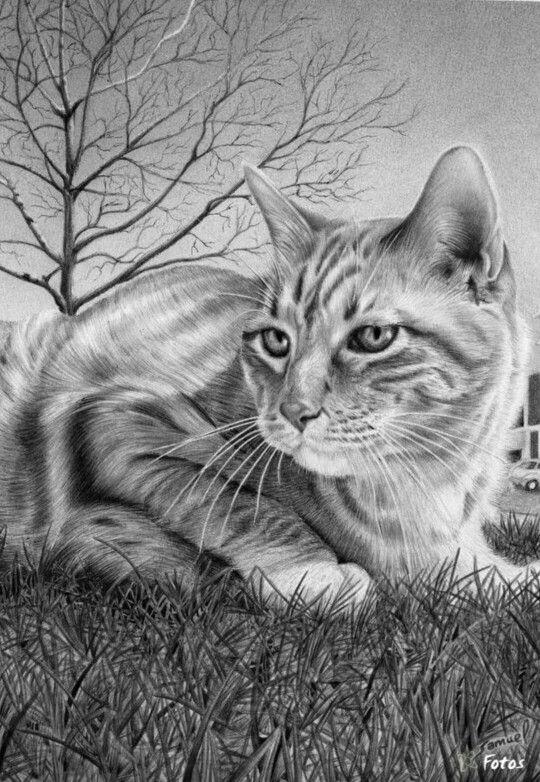 380 best images about Kat en Hond