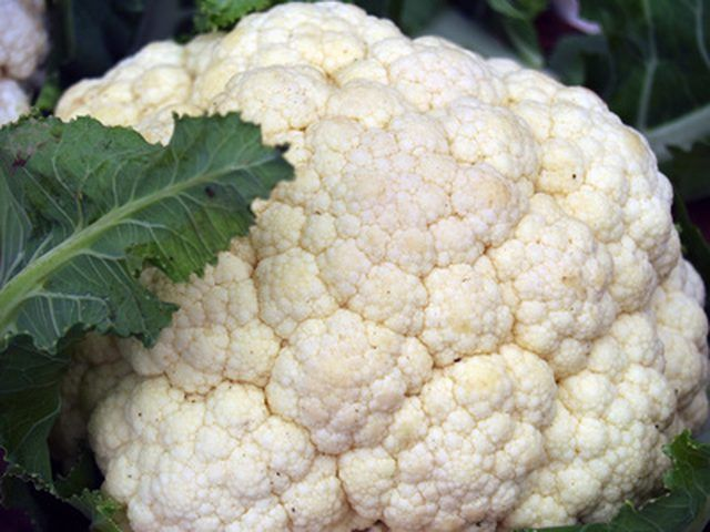 When cooking cauliflower, it's best to steam the vegetable. Boiling it can cause the florets to overcook, rendering them smelly, mushy and (in some cases) inedible. By contrast, steamed cauliflower is bright, sweet and slightly crisp. You can steam cauliflower even if you don't have a stove-top steamer basket. Steaming cauliflower florets in a covered …