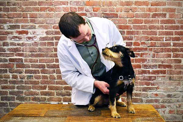 What Causes Seizures in Dogs and How Should They be Treated? | Dogster