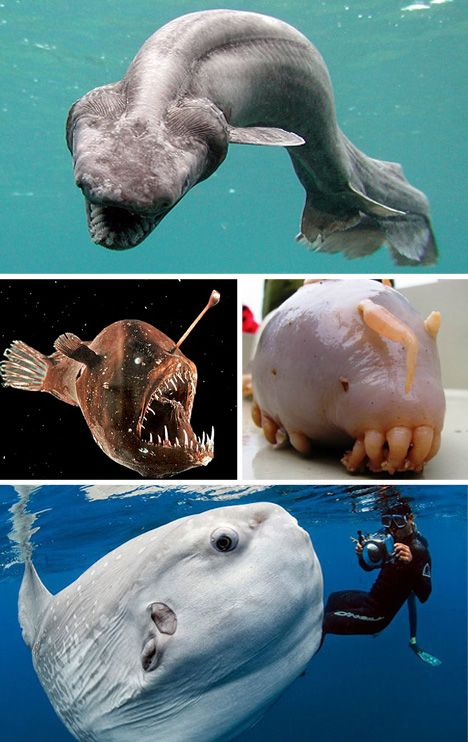 How can you not like the ocean when it has these creatures?? Also...floating phallus-fish? How did evolution think that was okay?