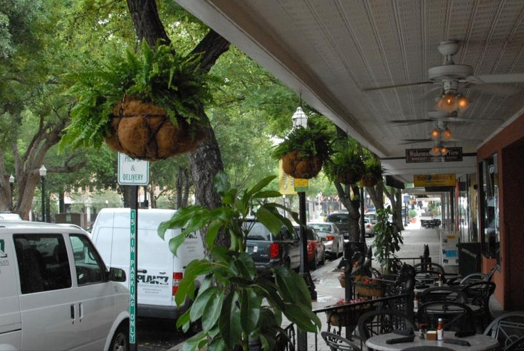 Plantings on the Harry's Bar & Grille patio in Lakeland! #plants