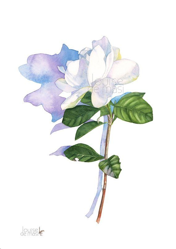 Gardenia Watercolour Painting Print A3 Size G30118 Gardenia
