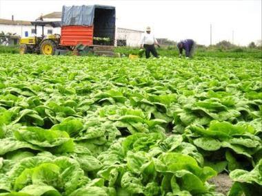 ΓΝΩΜΗ ΚΙΛΚΙΣ ΠΑΙΟΝΙΑΣ: Πληρωμη για «Αμειψισπορά με ξηρικές καλλιέργειες σ...