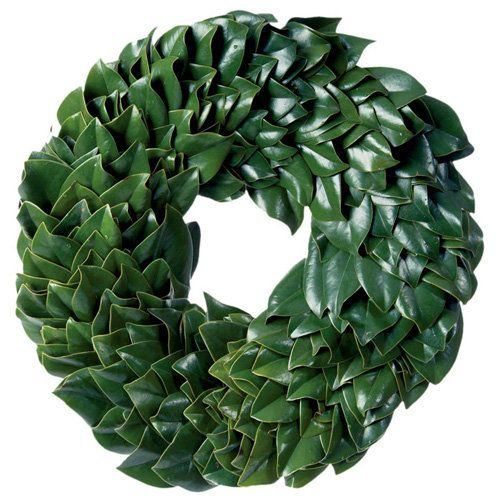 Magnolia Leaf Wreath:   You have probably seen plenty of wreaths and holiday decorations made out of evergreens with needles, but there are also evergreens out there with plush, luxuriant leaves! Consider the advantages of a magnolia leaf wreath: it is much softer to the touch, and it lasts quite a long time, drying out rather than dying so that it only improves over time, and can provide years of enjoyment.