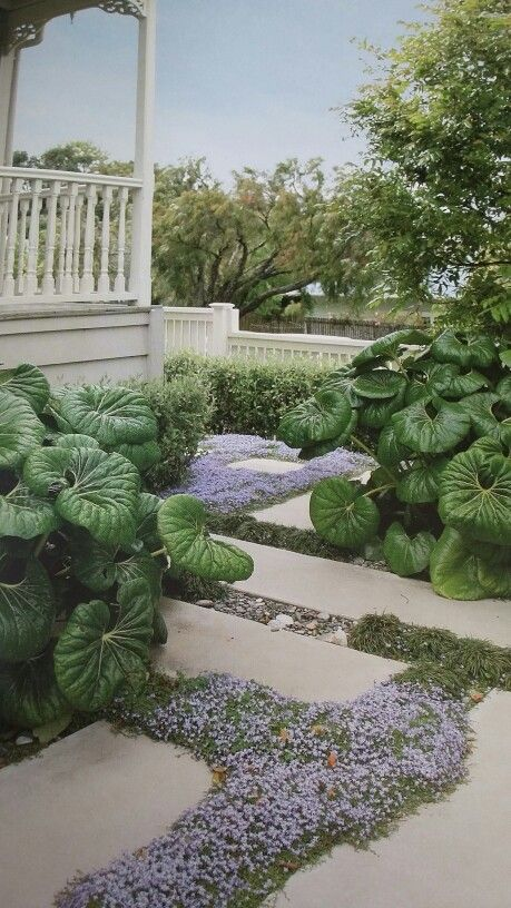 How Tractor Seat Plant Growing : Best images about formal gardens on pinterest