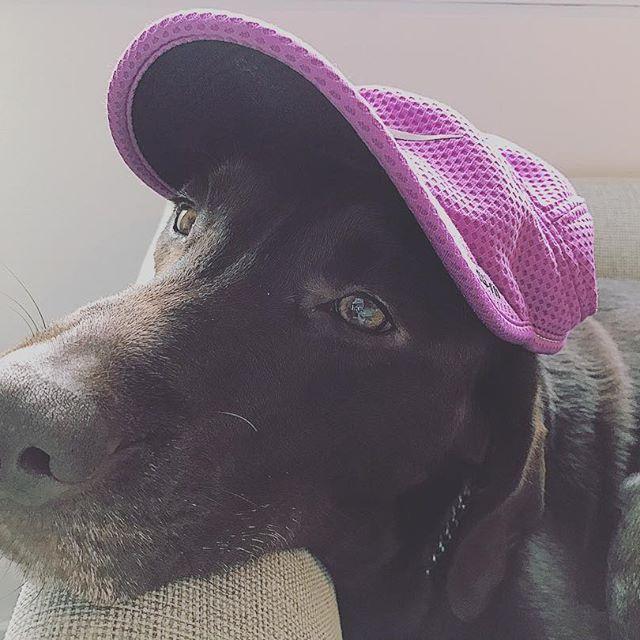 久しぶりの... 雨の中散歩から帰り、ご飯を食べ、そしてまた、眠い私。 目がとろ〜ん💤 * #ラブラドールレトリバー #ラブラドール #labrador #lab #愛犬 #大型犬との暮らし #可愛い犬 #instadog #帽子をかぶる犬 #dog #チョコラブ #チョコレートラブラドールレトリバー
